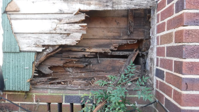 Rotten Wood in Foundation